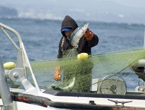 Tribal and state salmon co-managers come to agreement on upcoming fishing seasons