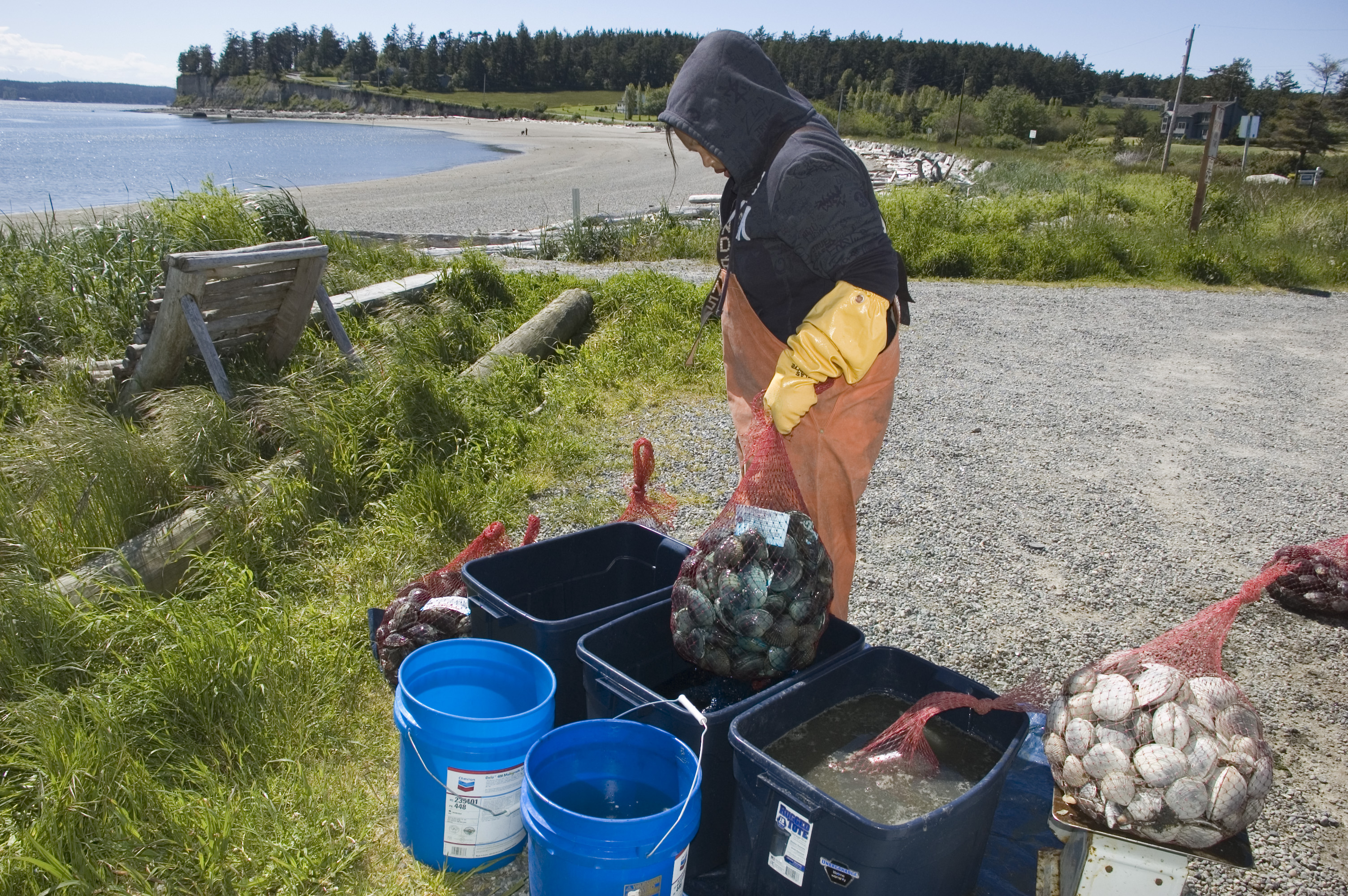 Swinomish Tribe harvests clams in new bait fishery
