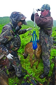 Survival rates focus of Makah's elk studies