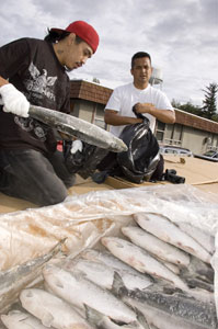 Lummi Nation distributes sockeye to families