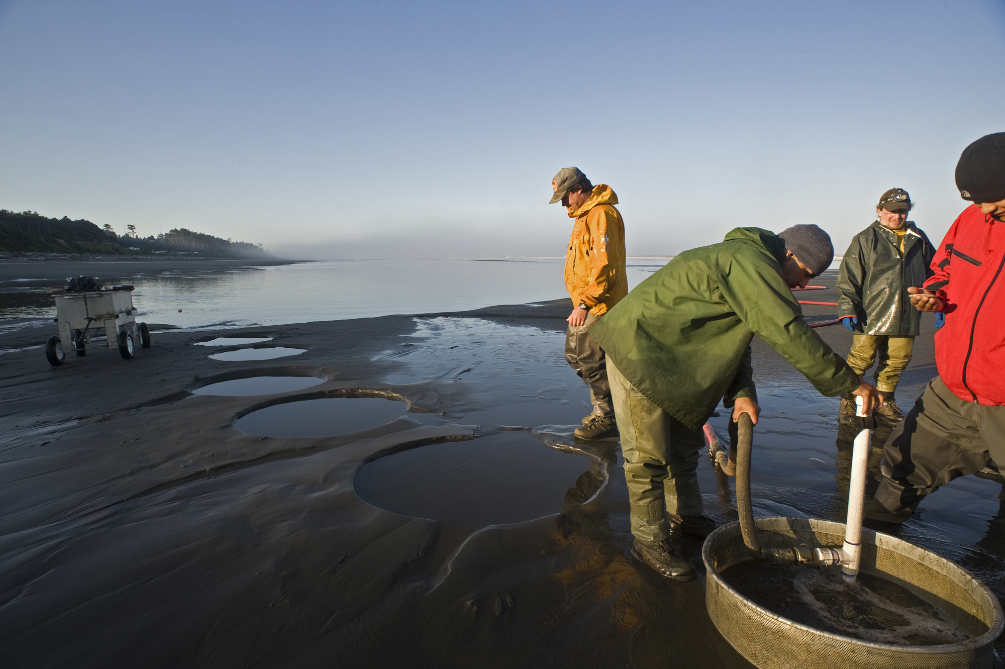 Razor clam digs scheduled following surveys
