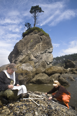 Quinault intertidal surveys protect and inform