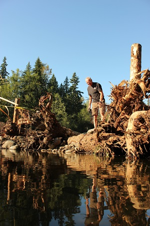 Blake Smith, enhancement manager for the Puyallup Tribe, inspects a new logjam that is part of a bank protection effort at a future salmon pond.