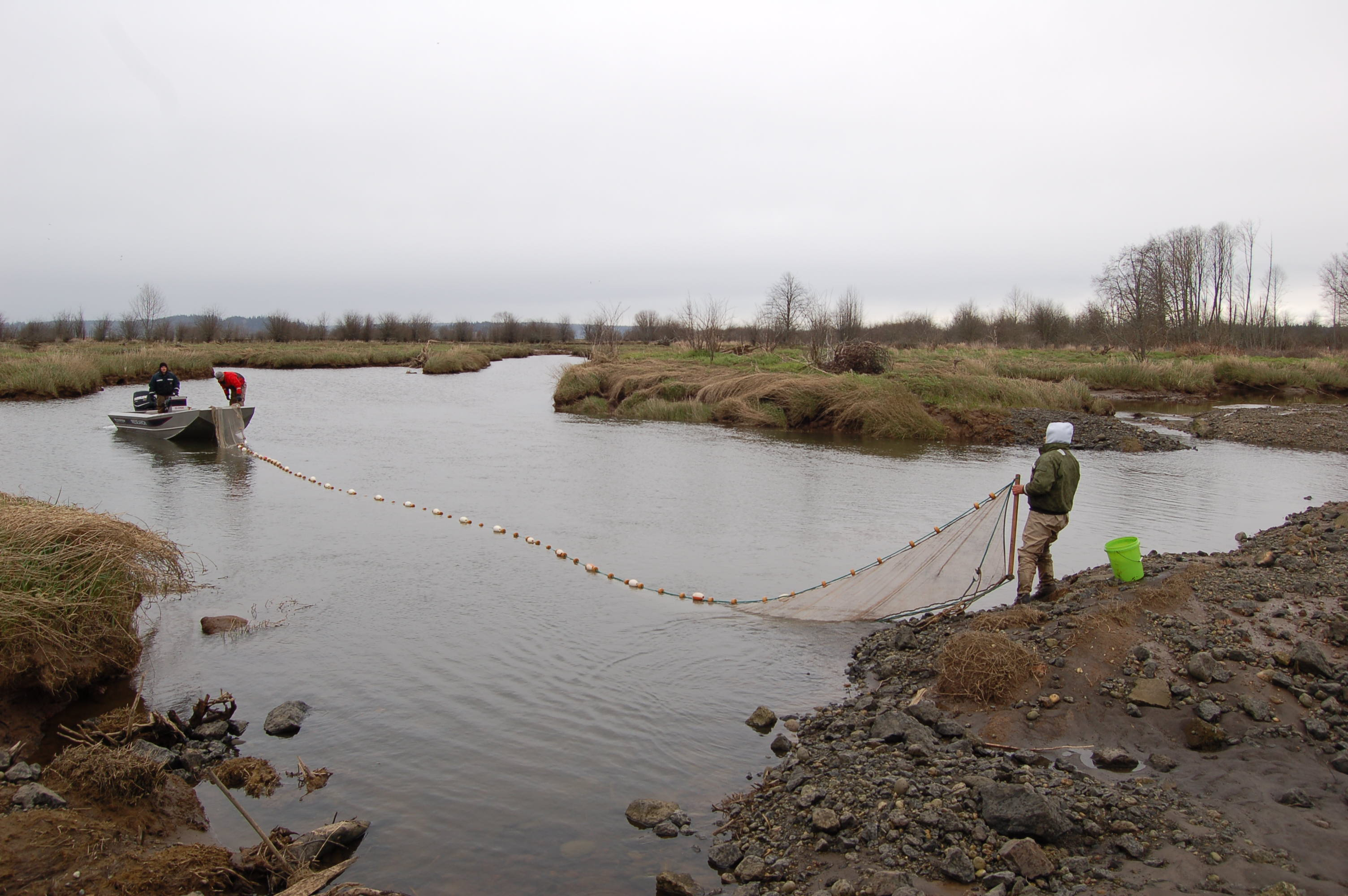 Marine survival research focuses on juvenile salmon for Nisqually river fishing report