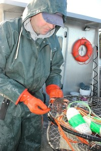 George Sterns, shellfish biologist for the Puyallup Tribe, inspects a sick sea star caught in the tribe's crab monitoring study.