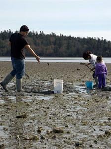 Lummi tribal members harvest clams in Portage Bay in 2011.