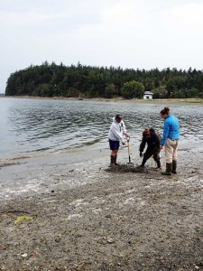 Swinomish staff and OSU students sample clams on Kukutali Preserve.