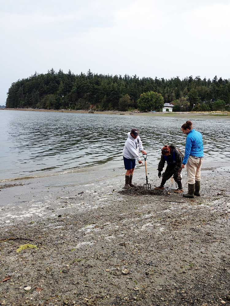 Tribes partner with OSU to study clam contamination