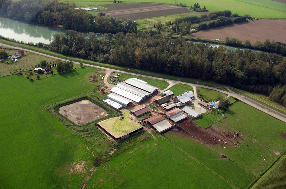 Dairy Farm Pollution Costs Lummi Nation
