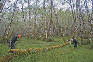 Quinault Indian Nation jump-starting important spruce tree growth