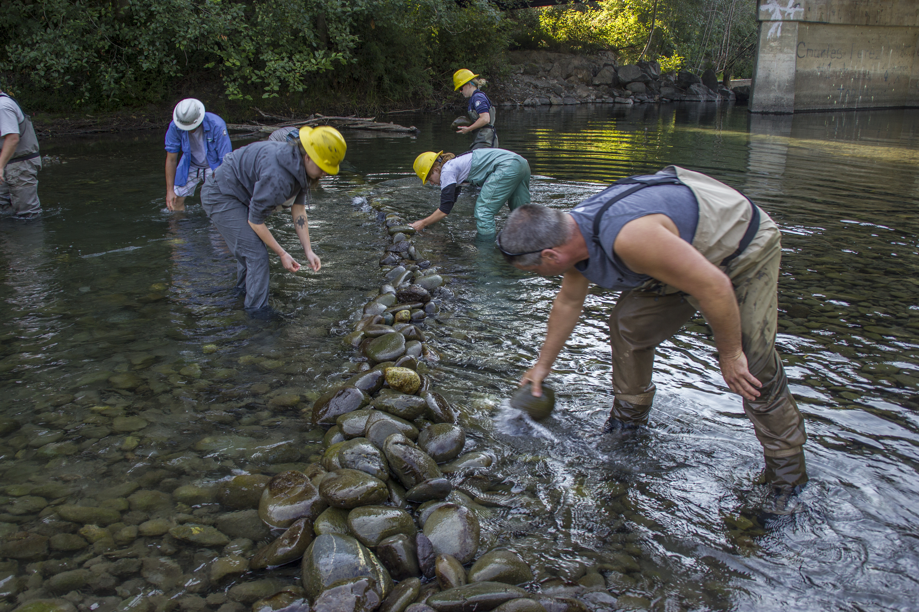 Video: Jamestown S'Klallam Tribe, agencies, help salmon get up the Dungeness River