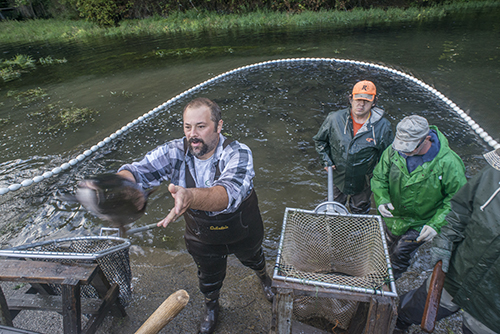 Quileute Tribe and state Sol Duc hatchery send salmon to fire victims and firefighters