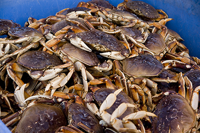Dungeness crab safe to eat and headed to market soon