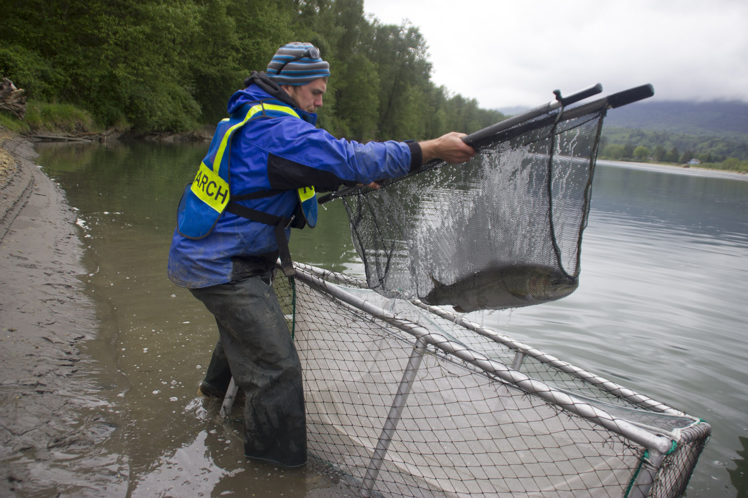 Upper Skagit Tribe tracks steelhead life cycle