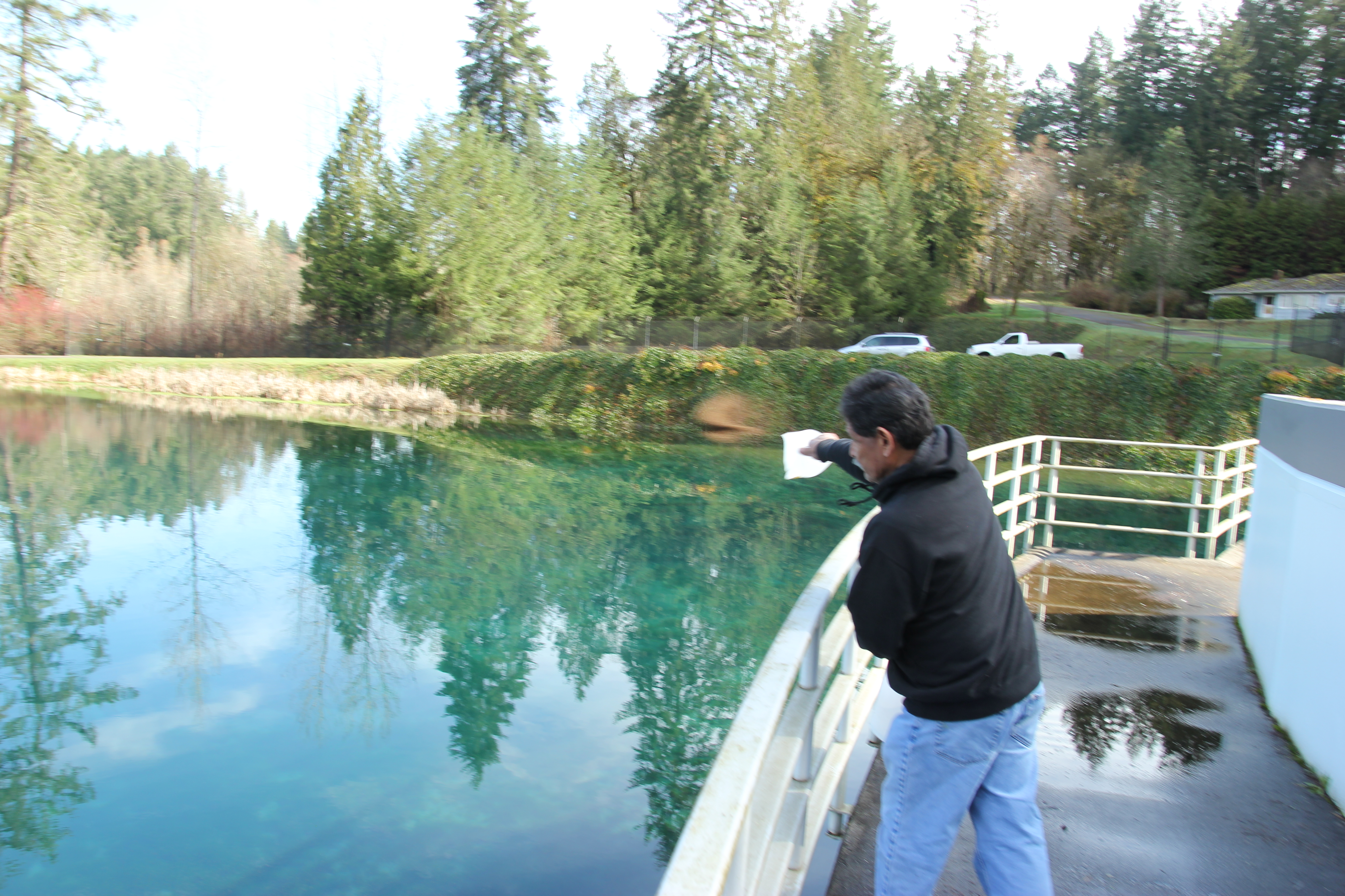 Hatchery salmon coming back to McAllister Creek