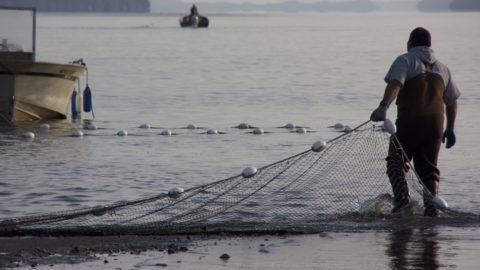 Salmon co-managers agree on Puget Sound fisheries, will work to improve season-setting process
