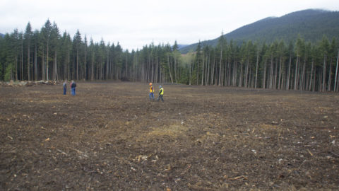 Salvaged trees help pay for elk meadow in North Cascades