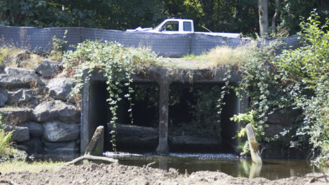 9th Circuit: Culverts must be fixed