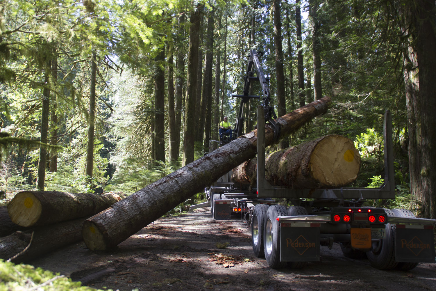 Tribal partnership with forest service expands restoration projects