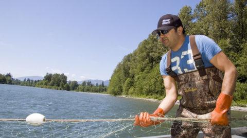 Salmon harvest is still held to a higher standard than habitat