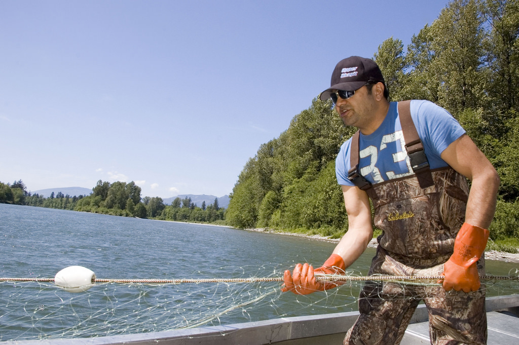 Salmon harvest is still held to a higher standard than habitat