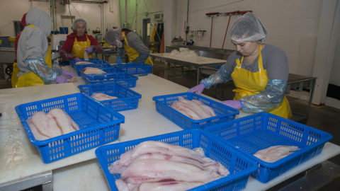 Makah Fishermen Adding Catch Value at Home