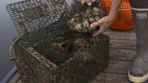Jamestown, Partners Establishing Warning System for Harmful Algal Blooms