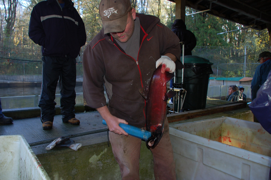 Being Frank: Data Drives Fisheries Management