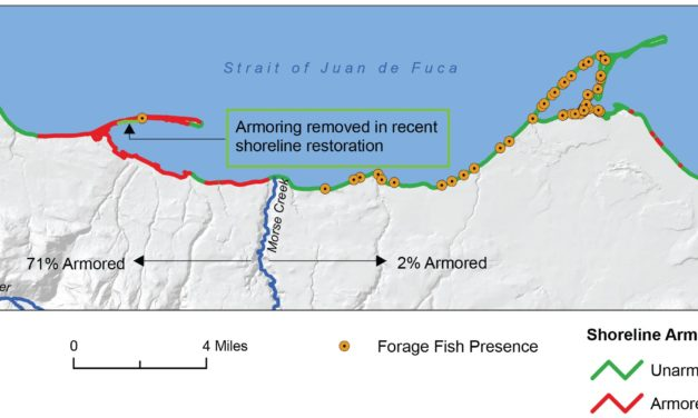 State of Our Watersheds: Shoreline Armoring Diminishes Nearshore Fish Habitat