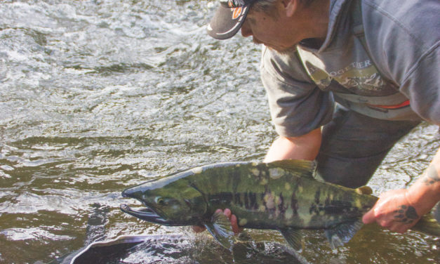 Magazine: In-season Management Leads to Coho Fisheries