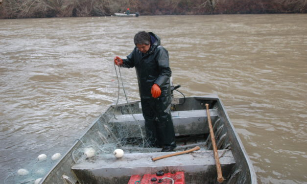 Nisqually Tribe (among others) closes fishery to protect salmon