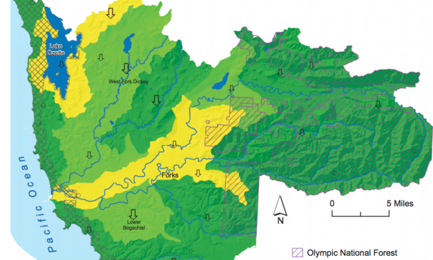 State of Our Watersheds: Less forest cover is bad news for coastal salmon