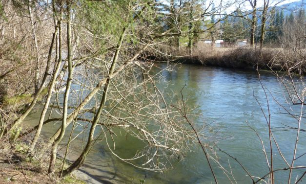 State of Our Watersheds: Shoreline Management Act needs enforcement