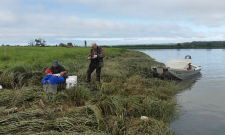 Stillaguamish restoration restores wetlands, protects farmland