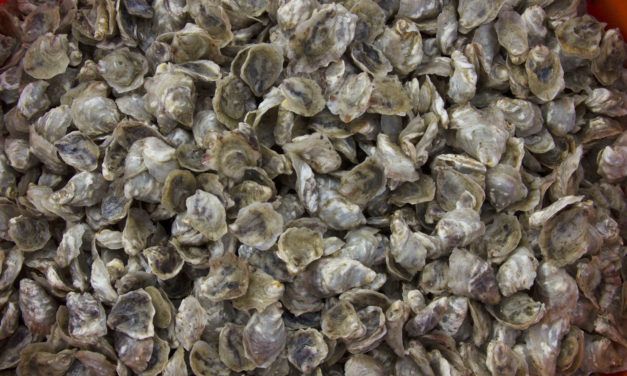 Jamestown Shellfish Hatcheries Address Ocean Acidification and Oyster Populations