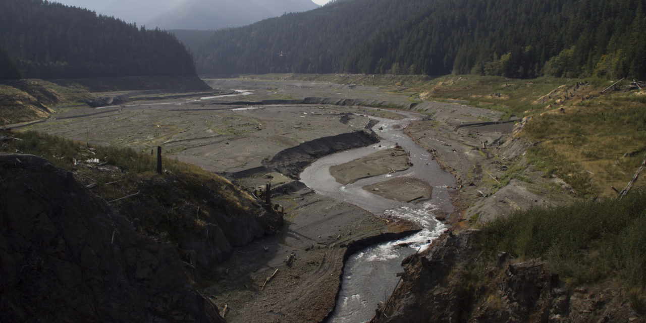Chinook Salmon Egg Nests Increasing Above Former Elwha River Dam Sites