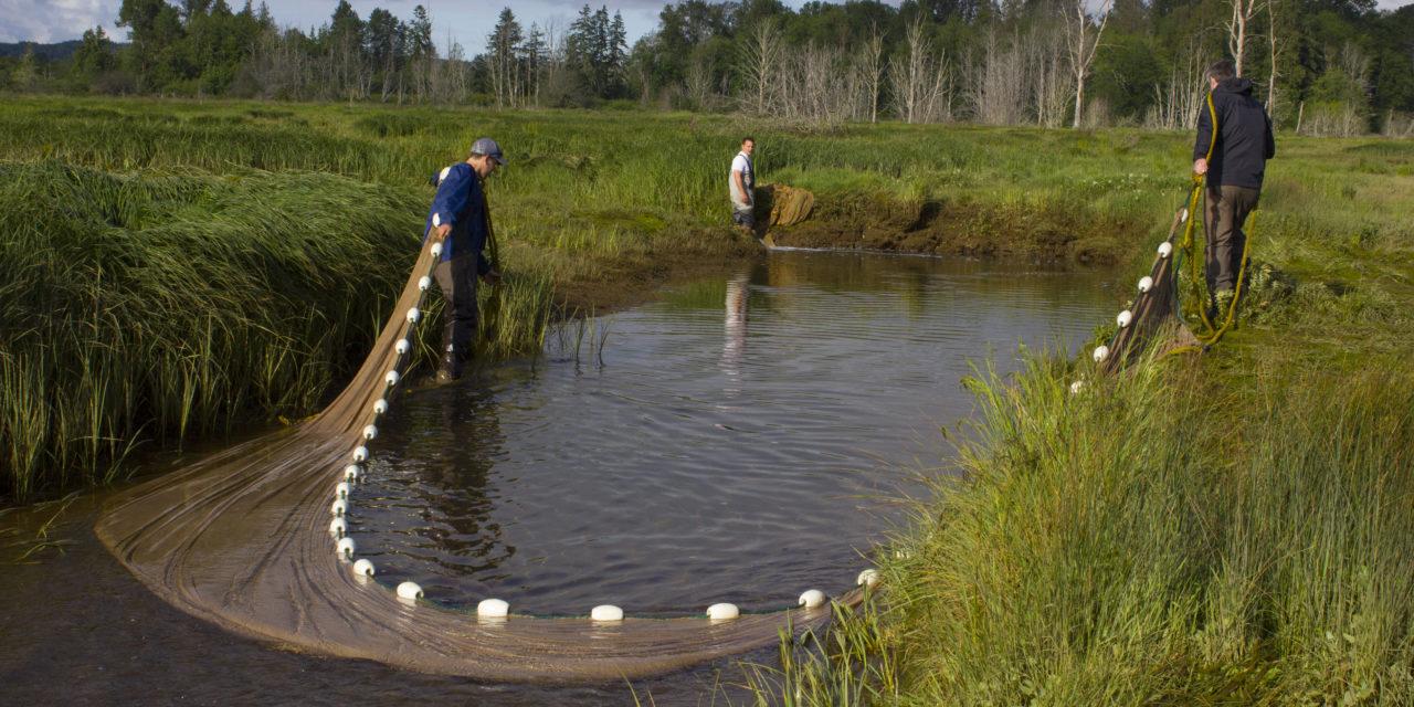 Restoration Wrapping Up on Skokomish Estuary