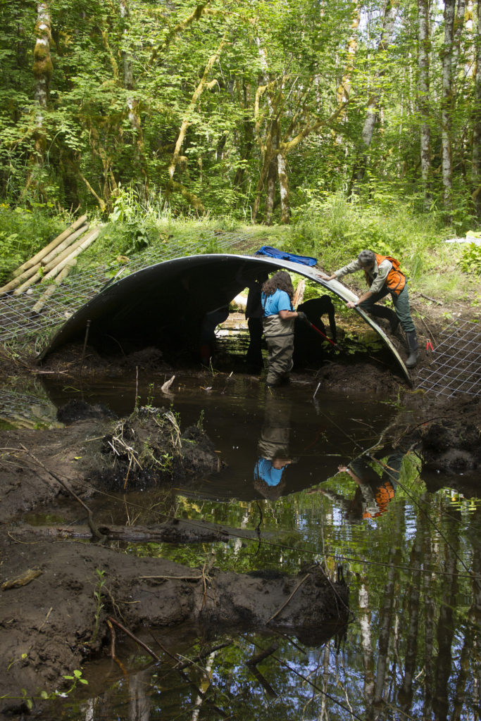Tribal staff clear a beaver dam from a culvert