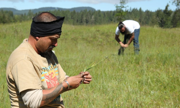 Tribe searches for camas in disappearing prairie