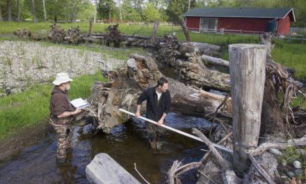 Stream Temperatures Provide Insight into Salmon Habitat