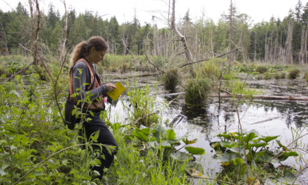 Reservation wetlands ranked by culturally important plants