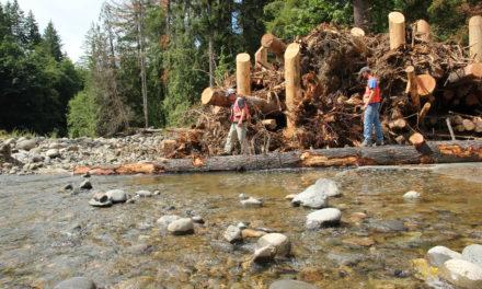 Nisqually Tribe restores salmon habitat on the Mashel River