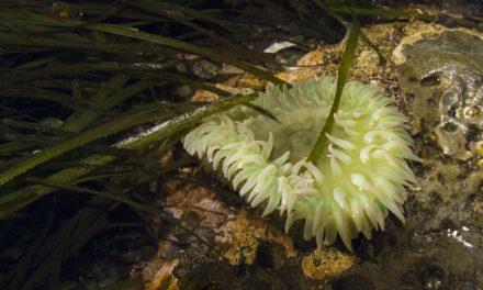 Makah Tribe Surveys Neah Bay's Intricate Intertidal Zone