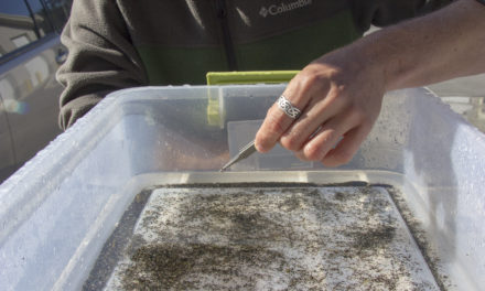Bugs and Dirt Help Tell the Story of the Elwha River Restoration
