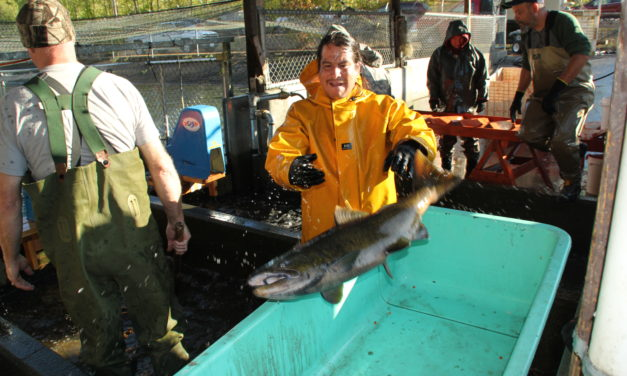 Neighbors carry home bounty from Nisqually tribal hatchery