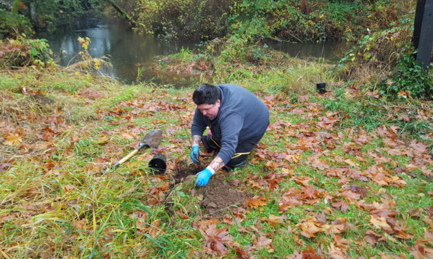 Streamside forest replaces invasive weeds