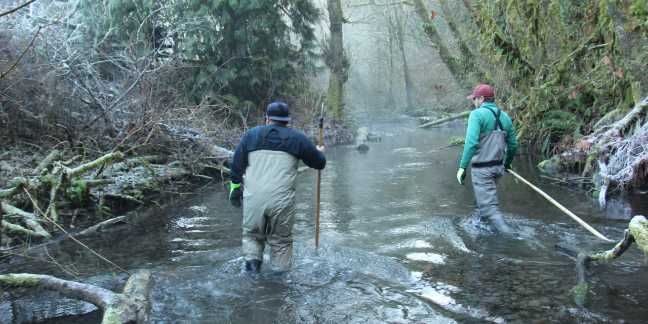 Tribal management means winter chum fishery opens for everyone