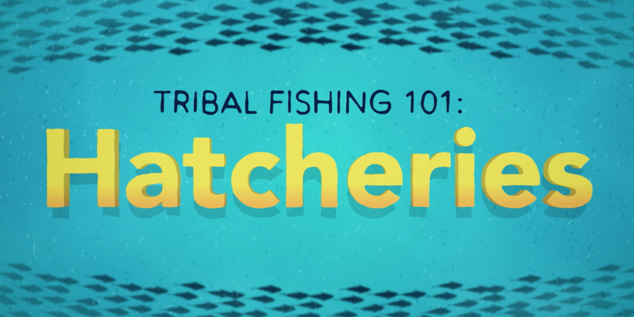 Tribal Fishing 101: Hatcheries