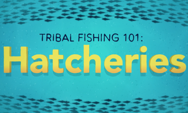 Tribal Fishing 101: Hatcheries