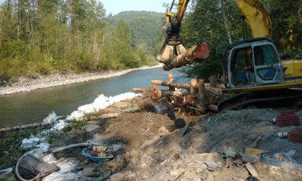 Lummi continues to improve salmon habitat on South Fork Nooksack River